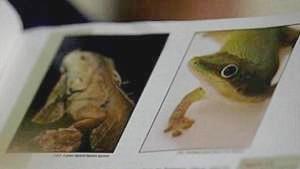 Lizards.jpg